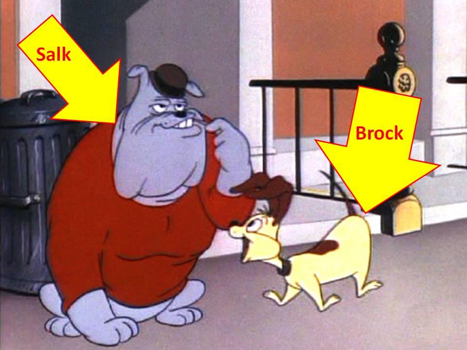 Dog Training Chester
